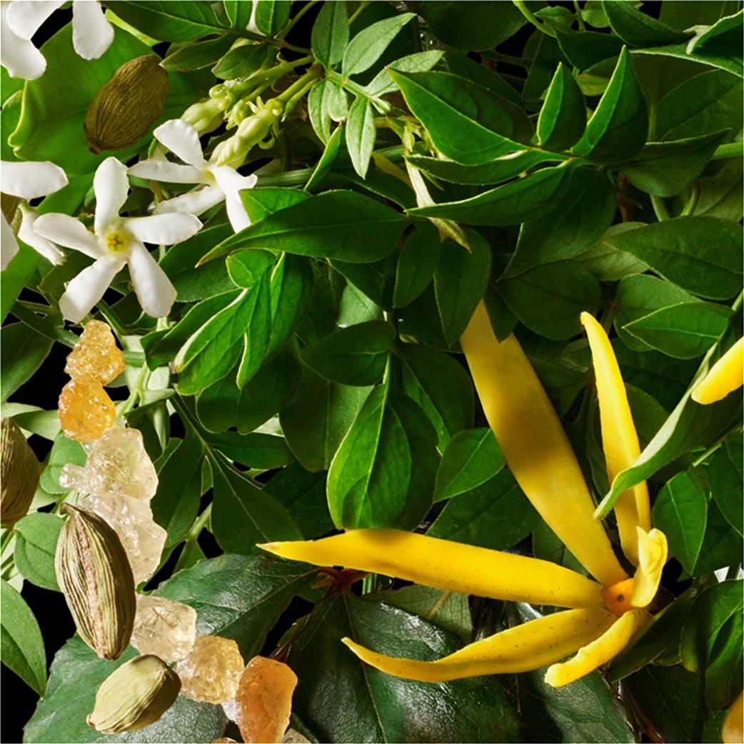Molton Brown Ylang-Ylang Three Wick Candle 480 gr 5